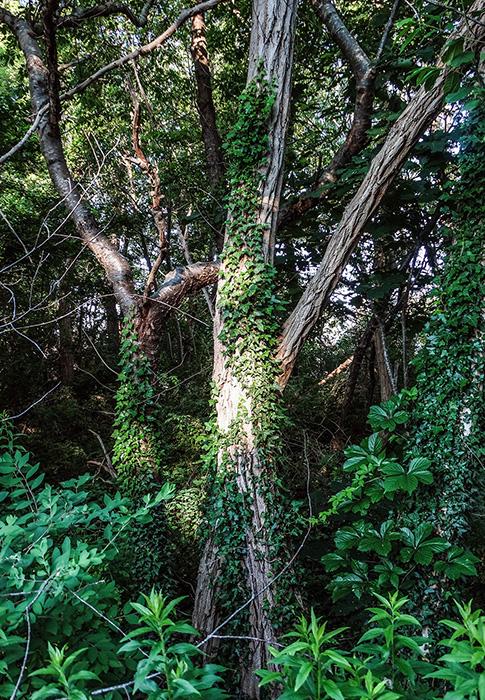 deep summer trees