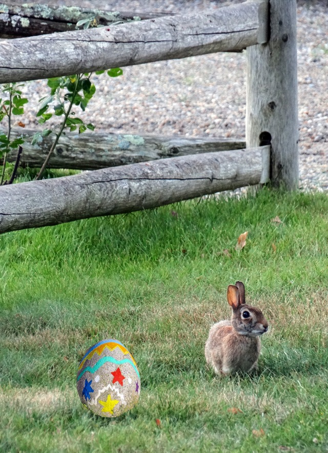 bunny by the fence with egg