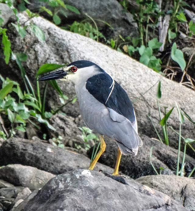 observation heron