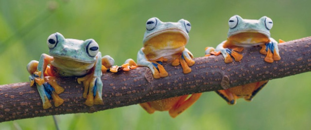 three frogs.jpg