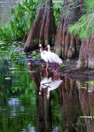ibis interraction