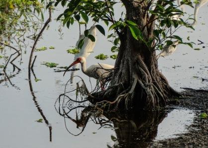 ibis topsey turvey world