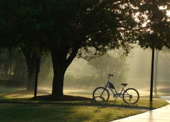 misty morning bicycle and walker