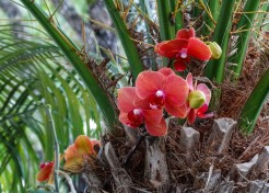 red orchids bunch