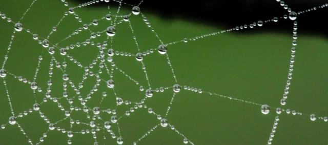 spider-web-399854_1920